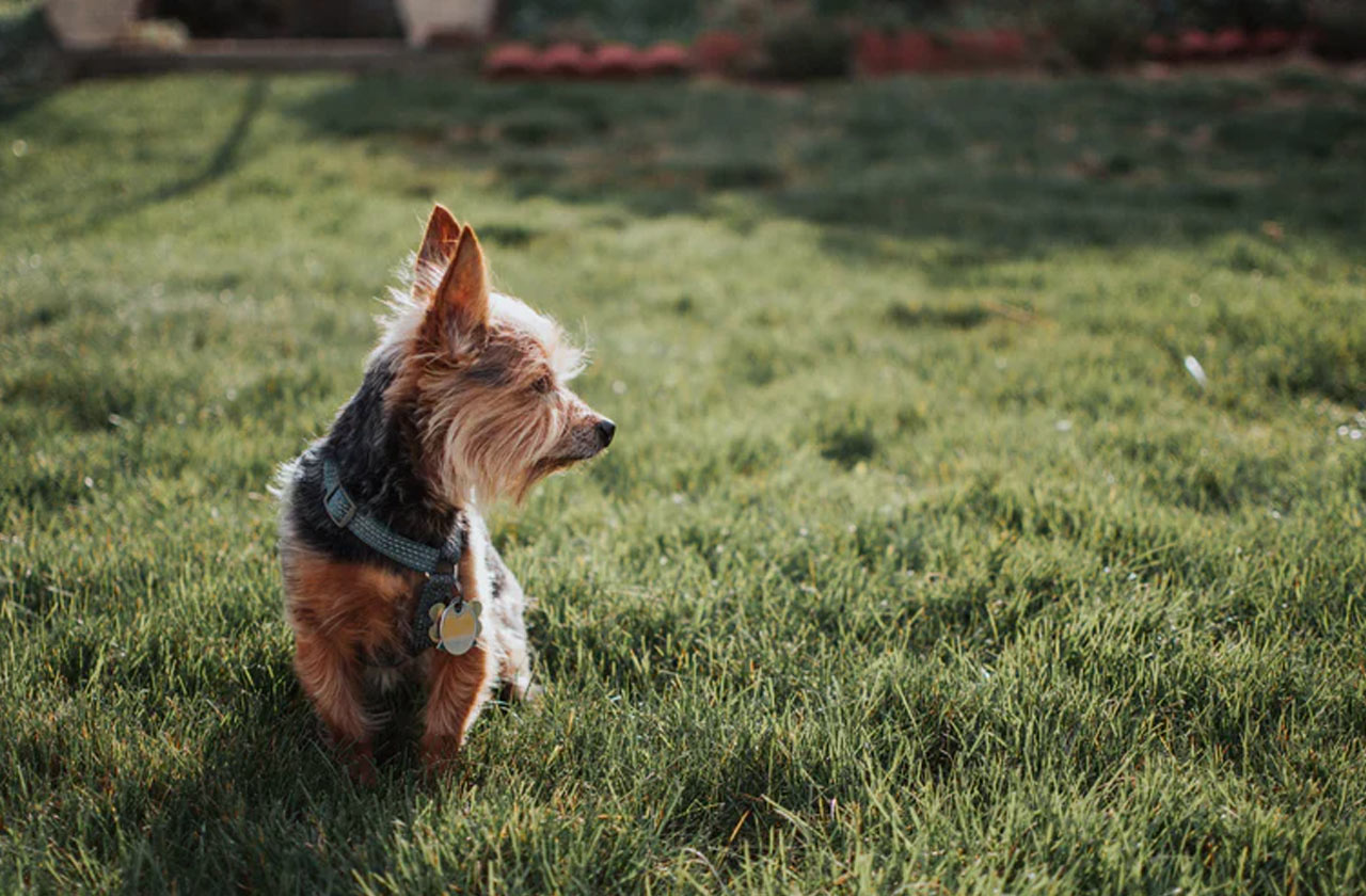 5 Reasons to Set up A Fence for Your Pet