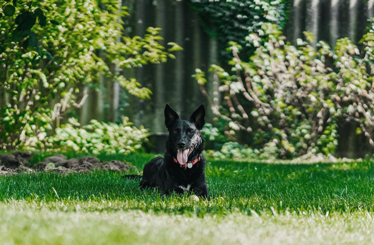 Creating a Safe and Beautiful Outdoor Environment for Your Pet